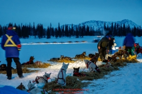 Teams rest on straw at the Finger Lake checkpoint as Jessie Royer runs through the checkpoint in the early morning hours on Monday, March 05, 2018 during the Iditarod Sled Dog RacePhoto by Jeff Schultz/SchultzPhoto.com  (C) 2018  ALL RIGHTS RESERVED