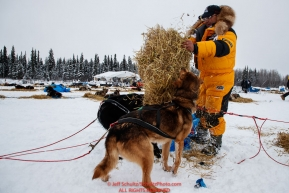 Michi Konno gives his dogs straw after arriving at the Nikolai checkpoint during the 2018 Iditarod race on Tuesday afternoon March 06, 2018. Photo by Jeff Schultz/SchultzPhoto.com  (C) 2018  ALL RIGHTS RESERVED