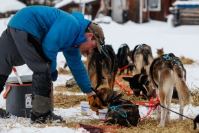 Jessie Holmes feeds his dogs at the Nikolai checkpoint  during the 2018 Iditarod race on Tuesday afternoon March 06, 2018. Photo by Jeff Schultz/SchultzPhoto.com  (C) 2018  ALL RIGHTS RESERVED