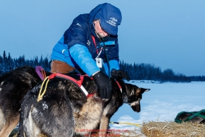 Volunteer veterinarian Timothy Bowser examines a Ryan Redington dog at the Nikolai checkpoint during the 2018 Iditarod race on Tuesday March 06, 2018. Photo by Jeff Schultz/SchultzPhoto.com  (C) 2018  ALL RIGHTS RESERVED