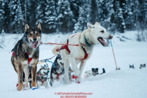 Mitch Seavey's team runs up the river bank and into the Nikolai checkpoint during the 2018 Iditarod race on Tuesday March 06, 2018. Photo by Jeff Schultz/SchultzPhoto.com  (C) 2018  ALL RIGHTS RESERVED