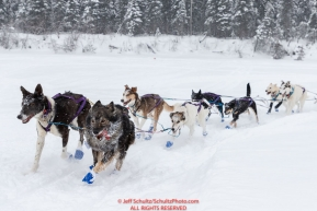 Jessie Royer's team runs up the river bank during a snowfall just prior to  the Nikolai checkpoint during the 2018 Iditarod race on Tuesday March 06, 2018. Photo by Jeff Schultz/SchultzPhoto.com  (C) 2018  ALL RIGHTS RESERVED