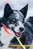 Joar Leifseth Ulsom's dog