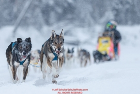 Wade Marrs leaders on the river just prior to the Nikolai checkpoint during the 2018 Iditarod race on Tuesday March 06, 2018. Photo by Jeff Schultz/SchultzPhoto.com  (C) 2018  ALL RIGHTS RESERVED