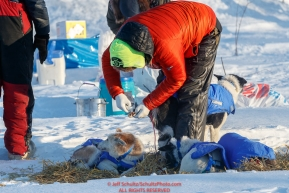 Wade Marrs puts salve on his dog's paws at the checkpoint in Manley Hot Springs during the 2017 Iditarod on Tuesday March 7, 2017.Photo by Jeff Schultz/SchultzPhoto.com  (C) 2017  ALL RIGHTS RESVERVED