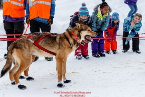 Tokotna school children watch Bradley Farquar dogs in the afternoon at the Takotna checkpoint during the 2018 Iditarod race on Wednesday March 07, 2018. Photo by Jeff Schultz/SchultzPhoto.com  (C) 2018  ALL RIGHTS RESERVED