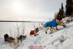 Paul Gebhardt and team run up the hill from the Yukon River into at the Galena checkpoint during the 2017 Iditarod on Thursday afternoon March 9, 2017.Photo by Jeff Schultz/SchultzPhoto.com  (C) 2017  ALL RIGHTS RESERVED