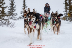 Emily Maxwell's team runs on the trail just priort to the Iditarod checkpoint on Friday, March 9th during the 2018 Iditarod Sled Dog Race -- AlaskaPhoto by Jeff Schultz/SchultzPhoto.com  (C) 2018  ALL RIGHTS RESERVED
