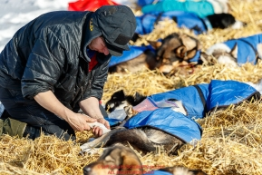 Misha Wiljes puts foot salve on the dog's paws at the Galena checkpoint during the 2017 Iditarod on Friday afternoon March 10, 2017.Photo by Jeff Schultz/SchultzPhoto.com  (C) 2017  ALL RIGHTS RESERVED