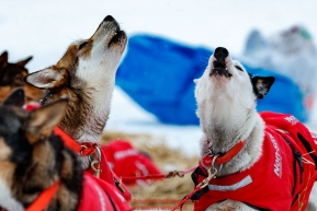 Meredith Mapes dogs howl as Meradith readies to leave the ghost-town checkpoint of Iditarod on Saturday, March 10th during the 2018 Iditarod Sled Dog Race -- AlaskaPhoto by Jeff Schultz/SchultzPhoto.com  (C) 2018  ALL RIGHTS RESERVED