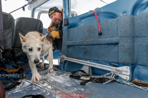 Race Judge Warren Palfrey loads a dropped dog into pilot Jerry Wortley's plane at the ghost-town checkpoint of Iditarod on Saturday, March 10th during the 2018 Iditarod Sled Dog Race -- AlaskaPhoto by Jeff Schultz/SchultzPhoto.com  (C) 2018  ALL RIGHTS RESERVED