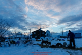 Mats Petterrson feeds his dogs at sunrise at the Kaltag checkpoint on Sunday March 10th during the 2019 Iditarod Trail Sled Dog Race.Photo by Jeff Schultz/  (C) 2019  ALL RIGHTS RESERVED