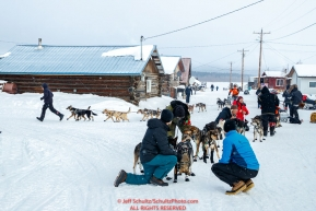 Veterinarians check Ray Redington Jr. team as Peter Kaiser pulls in behind at the Kaltag checkpoint during the 2017 Iditarod on Sunday afternoon March 12, 2017.Photo by Jeff Schultz/SchultzPhoto.com  (C) 2017  ALL RIGHTS RESERVED