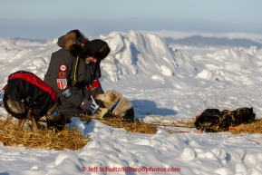 Volunteer vet Lee Morgan checks a Kristy Berington dog at Shaktoolik on Tuesday March 16, 2015 during Iditarod 2015.  (C) Jeff Schultz/SchultzPhoto.com - ALL RIGHTS RESERVED DUPLICATION  PROHIBITED  WITHOUT  PERMISSION