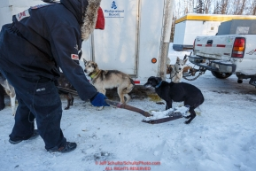 Veteran musher Ken Anderson scoops the poop from his team at the pre-race vet-check for dogs running this year's 2017 Iditarod at Iditarod Headquarters in Wasilla, Alaska.  Wednesday March 1, 2017Photo by Jeff Schultz/SchultzPhoto.com  (C) 2017  ALL RIGHTS RESVERVED