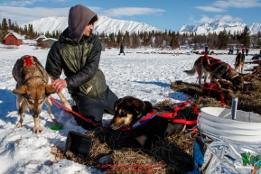 Nick Petit gives his dog Libby a massage at the Rainy Pass checkpoint  on Puntilla Lake during the 2018 Iditarod race on Monday March 05, 2018. Photo by Jeff Schultz/SchultzPhoto.com  (C) 2018  ALL RIGHTS RESERVED