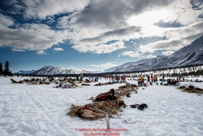 Teams rest in the sun on Puntilla Lake at the Rainy Pass checkpoint during the 2018 Iditarod race on Monday March 05, 2018. Photo by Jeff Schultz/SchultzPhoto.com  (C) 2018  ALL RIGHTS RESERVED