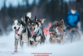Jessie Holmes team runs on the trail just prior to the Finger Lake checkpoint during the 2018 Iditarod race on Monday March 05, 2018. Photo by Jeff Schultz/SchultzPhoto.com  (C) 2018  ALL RIGHTS RESERVED