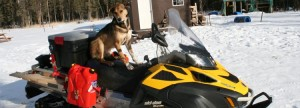 Iditarod Sabs Irondog2