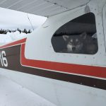 Dropped dog Iditarod Air Force