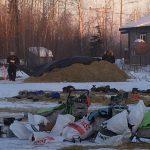 Tanana dog yard Iditarod